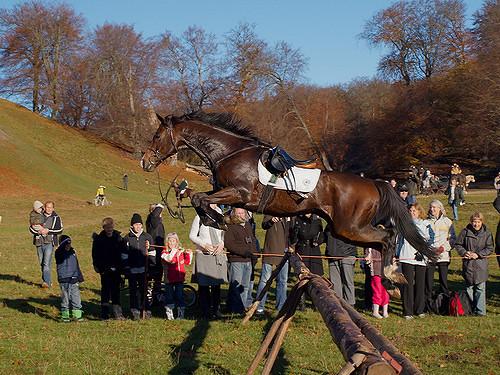 Faut-il forcément se battre avec son cheval ?