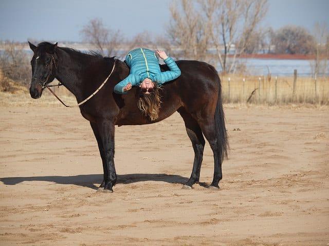 L'équitation du point de vue du cheval