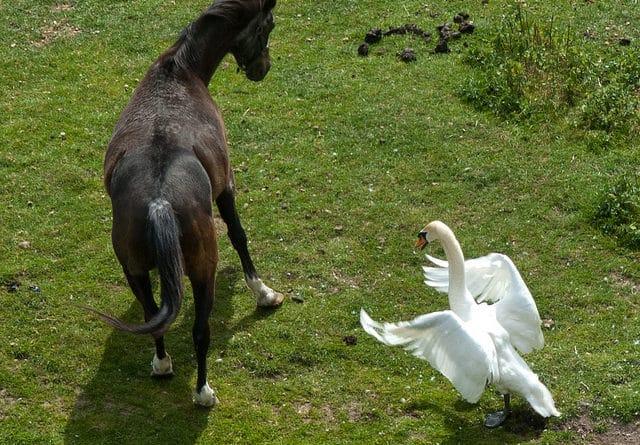 Comment gérer la peur de son cheval ?