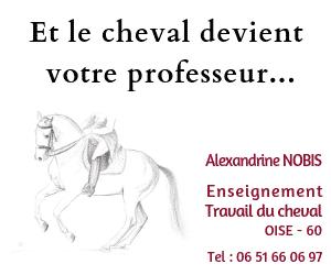 Le cheval devient votre professeur - A.Nobis Enseignement et travail du cheval