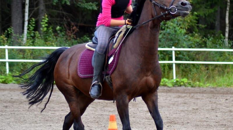 Comment gérer un cheval chaud ?