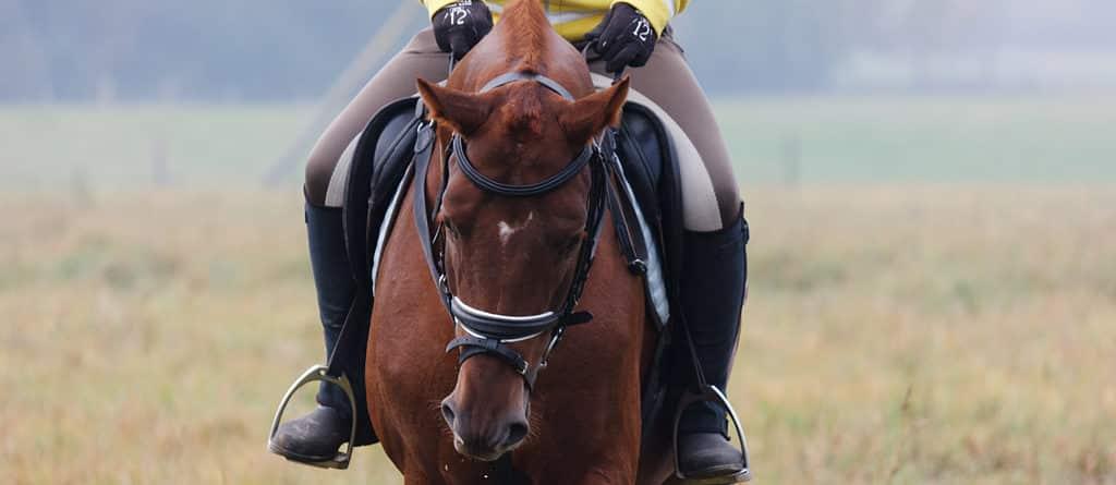 Le drame des chevaux dissymétriques