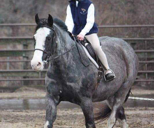 Reprendre le travail de son cheval après une pause