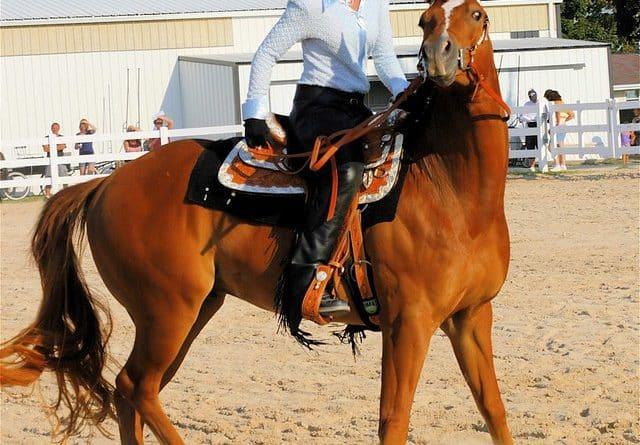 Respecter le bien-être de son cheval ça commence par…