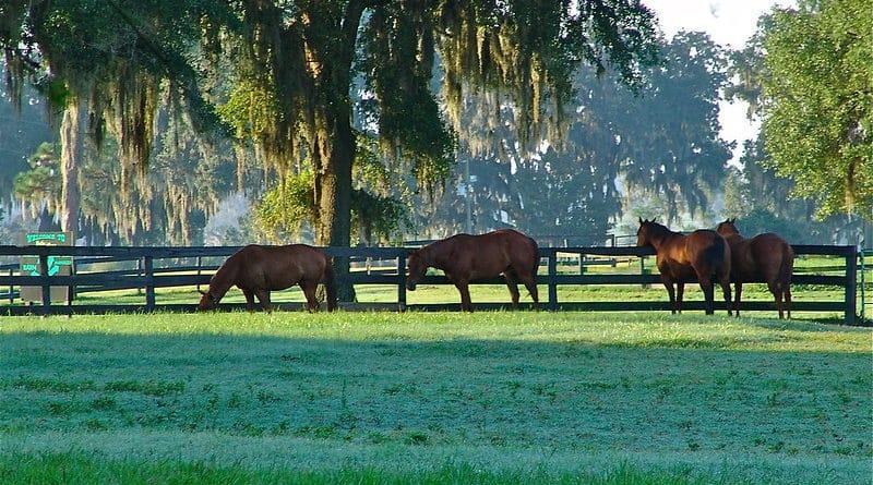 Prenons-nous une trop grande place dans la vie des chevaux ?