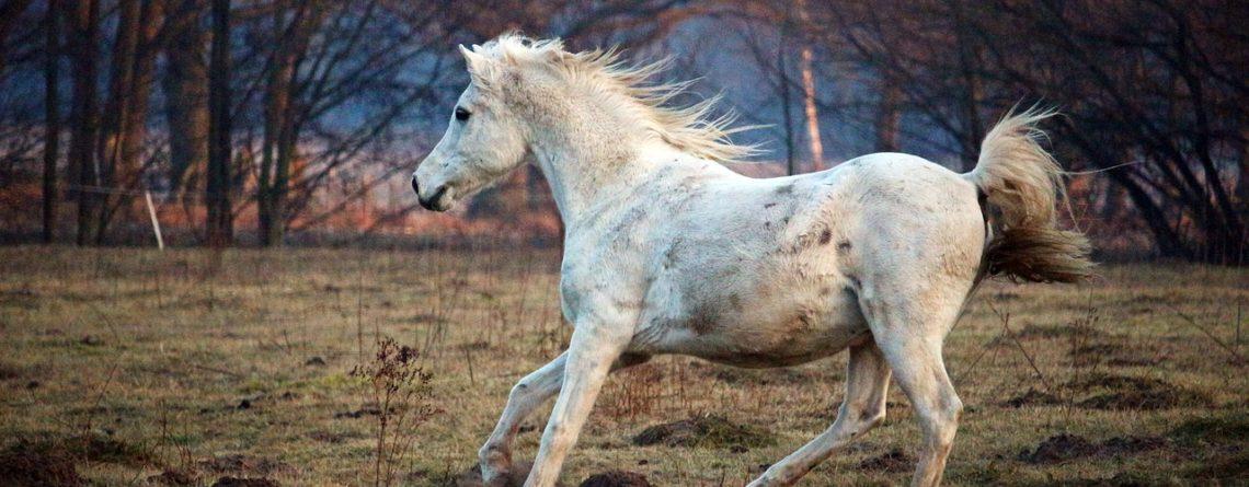 Evaluer le stress de votre cheval et éviter la panique